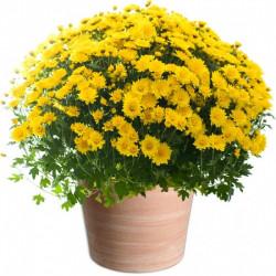 TOUSSAINT FLOWERS...