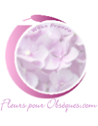 RÉUNION ISLAND FUNÉRAL FLOWERS
